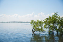 Spring flooding on the river. Waterlogged trees Stock Image