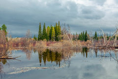 Spring flooding in Siberia Stock Photography