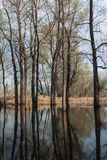 Spring flooding Stock Photography