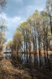 Spring flooding Royalty Free Stock Image