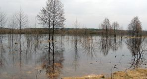 Spring floods. Flooding in the floodplain of the Berezina River. Flooded trees and shrubs  Spring floods. Flooding in the floodplain of the Berezina River Royalty Free Stock Photography