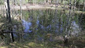 Spring floods on the Siberian river.Reflection of trees in water. Spring floods on the Siberian river. Reflection of trees in water,the movement of the camera stock video footage