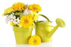 Spring floral Stock Photos