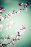 Spring floral Royalty Free Stock Photo