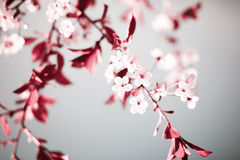 Spring Floral Abstract Background Stock Images