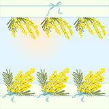 Spring floral abstract template background with mimosa acacia flower and place for text Royalty Free Stock Photos