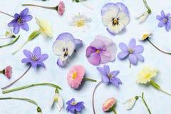 Spring floral arrangement Stock Images