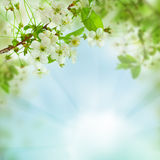 Spring floral background - abstract nature concept. With blue sky, leaves and flowers royalty free stock photo