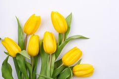 Spring floral background with beautiful yellow tulip flowers. Holiday and seasonal design. Copy space. Flat lay stock photography