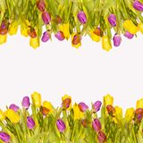 Spring floral background. Floral frame of tulips with empty space for text. Spring floral background. Floral frame of colorful tulips with empty space for text stock illustration
