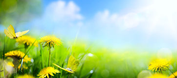 Spring Floral Background; Fresh Flower On Green Grass Background