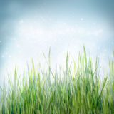 Spring floral background with green grass Stock Images