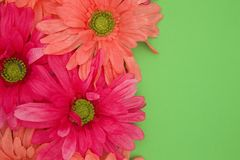 Spring floral background of pink and green Royalty Free Stock Photos