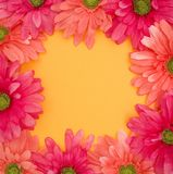 Spring Floral Background of pink and yellow Stock Photo