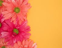 Spring Floral Background with room to add your own writing in Yellow Royalty Free Stock Photo