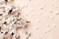 Spring floral background, texture and wallpaper. Flat-lay of white almond blossom flowers over light pink background stock images