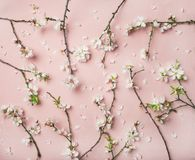 Spring almond blossom flowers over light pink background. Spring floral background, texture and wallpaper. Flat-lay of white almond blossom flowers over light Royalty Free Stock Image