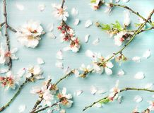 Spring floral background with white almond flowers and petals Royalty Free Stock Photography
