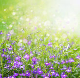 Spring floral background. Stock Photography