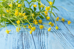 Spring floral background with yellow flowers buttercups on blue Royalty Free Stock Image