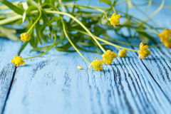 Spring floral background with yellow flowers buttercups on blue Stock Photo