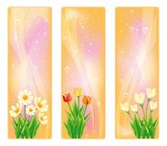 Spring floral banner,  Royalty Free Stock Photography