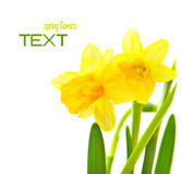 Spring floral border Royalty Free Stock Image