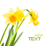 Spring floral border Royalty Free Stock Images
