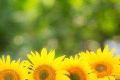 Spring floral border Stock Images