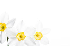 Spring floral border, beautiful fresh narcissus Stock Image