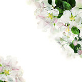 Spring Floral Border. White Flowers on Background Stock Images