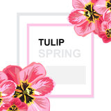 Spring floral card Stock Images