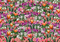 Spring floral colorful background. Spring flowers abstract background. Beautiful flora pattern. Digital illustration Hand drawn. For Art, web, print, wallpaper royalty free illustration