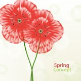 Spring floral concept Stock Photo