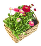 Spring floral decoration Royalty Free Stock Photos