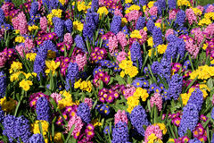 Spring Floral Display. A cheerful display of bright spring flowers stock photo