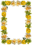 Spring floral frame Royalty Free Stock Images