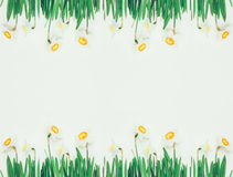 Spring floral frame of flowers daffodils on white background with space for text Royalty Free Stock Images