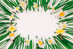 Spring floral frame of flowers and green leaves of Narcissus on white background with space for text Royalty Free Stock Image