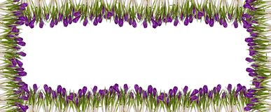 Spring floral frames Royalty Free Stock Image