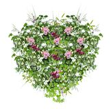 Spring floral heart-shaped decoration with pink roses, fresh green leaves and wild herbs, with white background royalty free stock photography