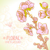 Spring floral Stock Photography
