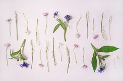 Flat-lay of lily of the valley, cornflower, daisy and peony garden flowers in rows. Spring floral layout. Flat-lay of lily of the valley, cornflower, daisy royalty free stock photography