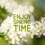 Spring floral mesh background Royalty Free Stock Image