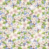 Spring floral sakura seamless background Royalty Free Stock Photo