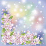 Spring floral sakura wallpaper, vector Stock Photos