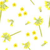 Spring floral seamless pattern with cowslip Stock Images