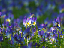 Spring flower Stock Photography