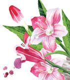 Spring flower royalty free illustration