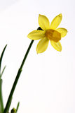 Spring flower. Photo of beautiful spring flower Stock Images